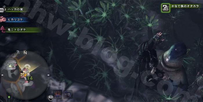 陸珊瑚の台地の「オタカラ蒐集04-02」