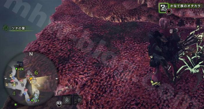 陸珊瑚の台地の「オタカラ蒐集06-01」