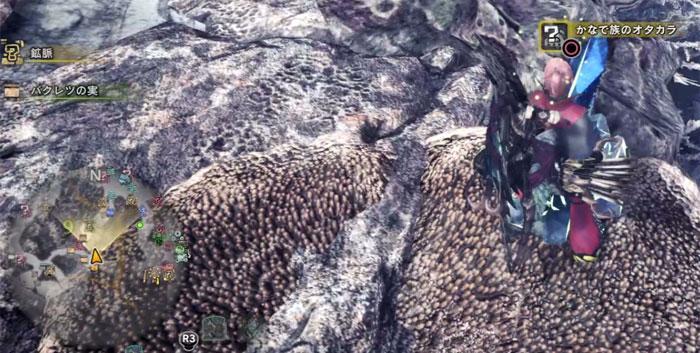 陸珊瑚の台地の「オタカラ蒐集07-01」