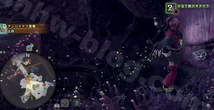 陸珊瑚の台地の「オタカラ蒐集08-02」