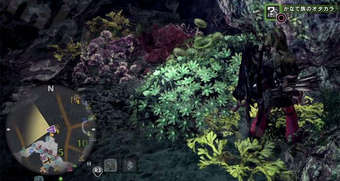 陸珊瑚の台地の「オタカラ蒐集08-03」